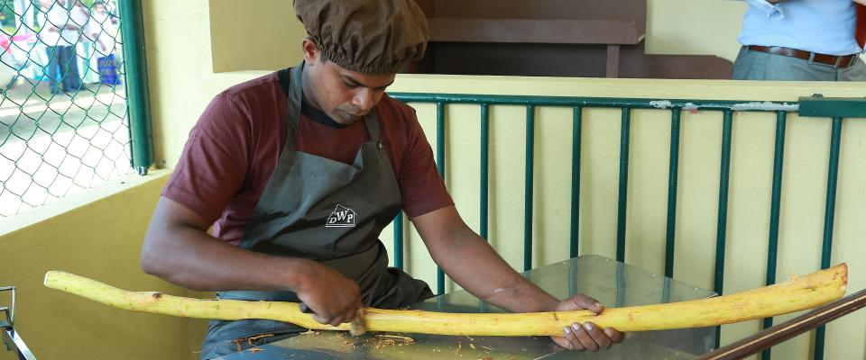 Srilanka cinnamon peeler